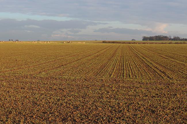 Ploughed field near Thurne, Norfolk