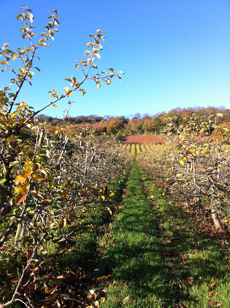 view through apple orchard