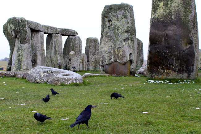 crows and jackdaws at Stonehenge