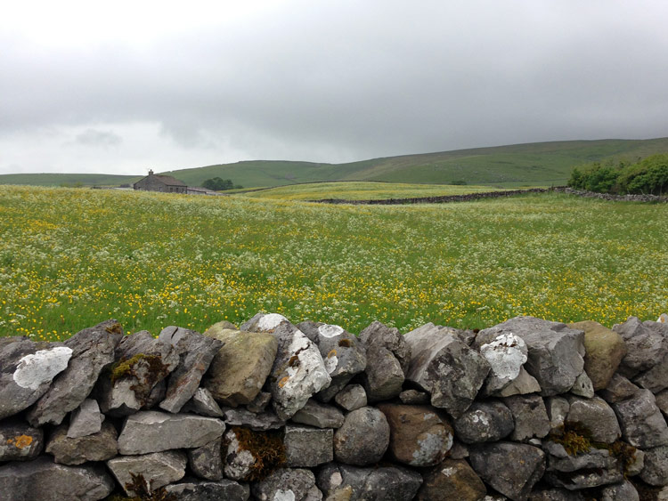 Hay meadow near Malham Tarn