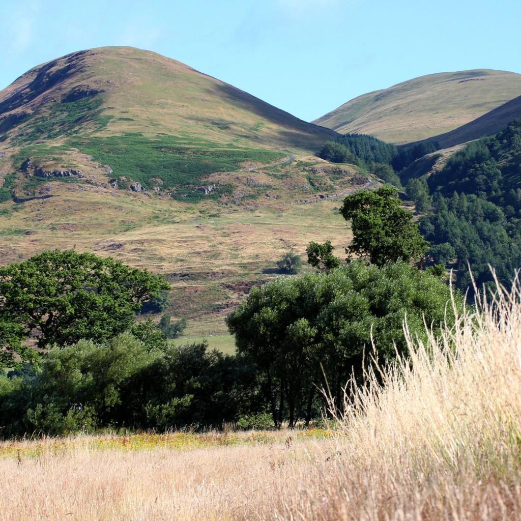 the meadow below the Ochil Hills